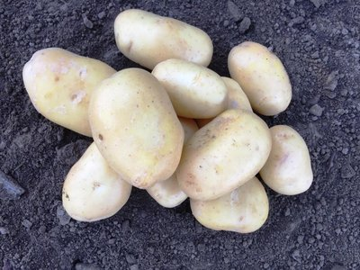 Bio Kartoffeln 500 gr.