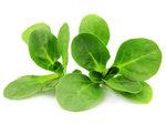Bio-Nüsslisalat-gerüstet-und-gewaschen-150-gr